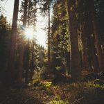 """9 syytä rakastaa metsää – """"Metsä ei koskaan torju minua, vaan ottaa aina avosylin vastaan"""""""