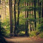 Luonto elvyttää kuormittavan arjen keskellä – Nämä 3 asiaa madaltavat kynnystä lähteä luontoon