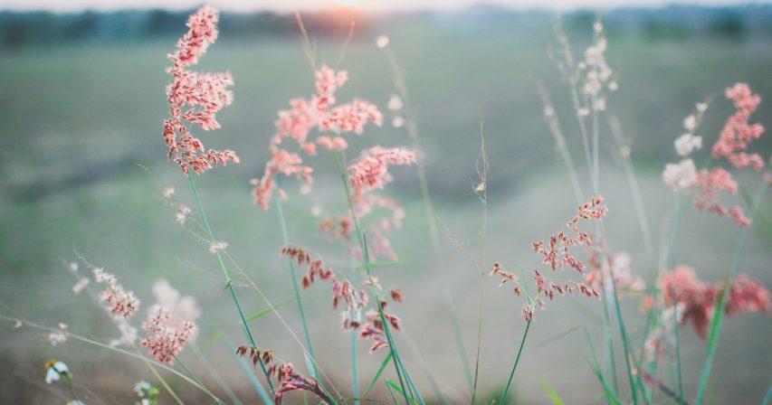 Kuvituskuva hempeät kukat Unsplash