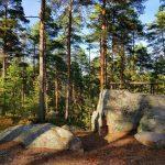 30 tapaa lepuuttaa mieltä metsässä ja kokea vahva yhteys luontoon
