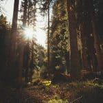 Rauhallinen hetki luonnossa auttaa tuntemaan, että kaikki on tänäänkin hyvin – Sami Tallbergin villiyrttisalaatti on ylistys kiitollisuudelle