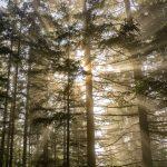 4 upeaa kokemusta, jotka metsä voi meille antaa – Onko luonto saanut sinutkin tuntemaan näin?