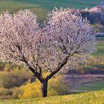 Herkkyys on välillä rankkaa – huumori ja myötätunto auttaa