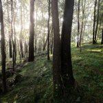 4 lahjaa, jotka metsä antaa meille – Näin voit hyödyntää niitä kaikkia