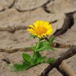 Herkkyys ei ole heikkoutta, vaan perusta todelliselle voimalle ja vahvuudelle