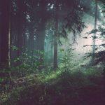 Luonnosta löydät itsesi – 5 keinoa itsetuntemuksen syventämiseen