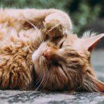 Läsnäolo ja rauhallinen hengitys ovat kuin pehmeä halaus, joka lämmittää silloinkin, kun maailma näyttää kylmältä – 6 voimakuvaa Sinulle