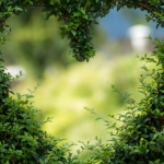 Hidasta tahtia, poikkea polulta ja haahuile – 3 tapaa kokea luonnon hoitava voima