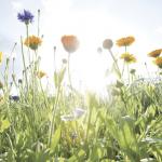 Maistuva kotiruokaresepti villiyrteistä – Vitamiinipitoiset ainekset löytyvät lähiluonnosta