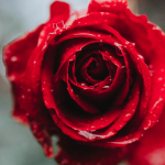 Surun lahja on syvenevä yhteys omaan sydämeen, toisiin ja maailmaan