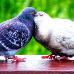 Lempeytystä (ja voimaantumista) rakkaudenkaipuiselle